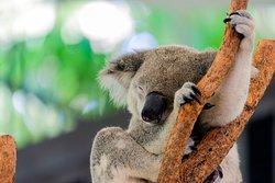 汉密尔顿岛野生动物世界
