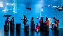 AQUATIS Aquarium-Vivarium Lausanne
