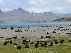 Elephant and Fur Seals