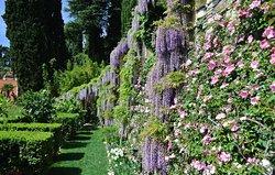 I Giardini di Villa della Pergola
