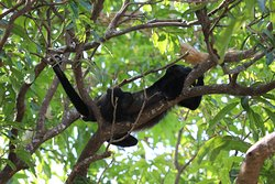 Able to see the howler monkeys up close, too.