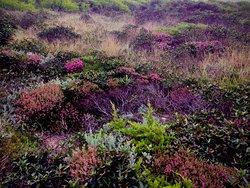 Wild colorful vegetation over Odeceixe beach