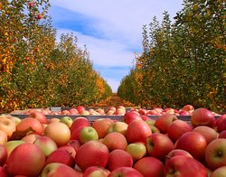 Boa Vista Orchards