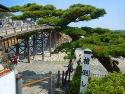 松と錦帯橋