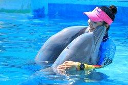 Dolphin Discovery Puerto Vallarta