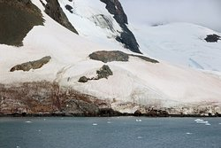 Gentoo penguins on rock along Lemaire Channel.  The penguins must travel up the steep path,