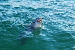Salty Dogs Dolphin Tours