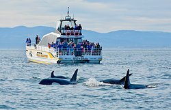 Eagle Wing Whale & Wildlife Watching Tours