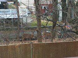 deer spotting!
