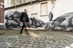 Ben from 'Ben's Ghent - Free & Private Tours' walking past a ROA piece depicting black and white graffiti rabbits. This stop is part of Ben's FREE Graffiti & Street Art Tour, one of Ben's 3 EXCLUSIVE FREE tours: 1. Free Graffiti & Street Art Tour 2. Free Gorgeous Ghent by night Tour 3. The free Highlights of Ghent Tour Join a Ben's Ghent free tip based tour now!