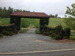 This is the entrance to Roaring River Vineyards 493 Brewer Mill Road, Traphill, NC 28685 336-957-2332 or rrv@wilkes.net