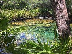 Un petit cenote bien caché sur le Quintana Roo