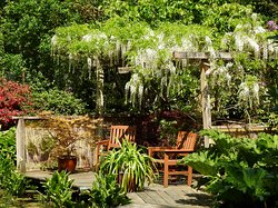 A fantastic white Wisteria by the pond. Gorgeous🥰🥰.