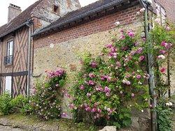 ジェルブロア ピンクのツルバラがきれい。