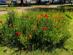 A planting of wild flowers on Southsea Common in full flower in the spring sunshine.