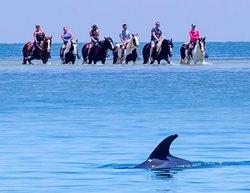C Ponies Beach Horseback rides