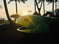 Turtle park is just a short stroll away