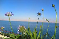 ดอกไม้ บางชนิด ข้าพเจ้า ไม่เคยเห็นมาก่อนมีรูปทรงและสีสรร สะดุดตา มากครับ