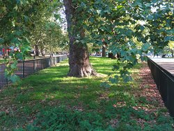 Hyde Park - In the middle of London - Lovely park