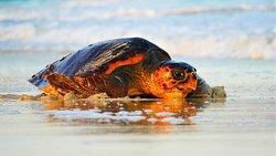 Sealife Experience Turtle Watching