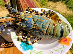 Special: Wild Caught Painted Spiny Lobster - กุ้งมังกรเจ็ดสี 🌈🦞