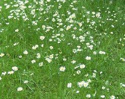 Blüten im Park...