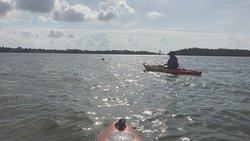 Kayaking with the dolphins