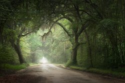MYSTERIOUS. ENCHANTING. ETHEREAL; These are just a few of the words that describe what is waiting for you on the back roads of South Carolina. Unlike any other experience you have ever had, join our guides as we usher you onto dirt roads that once led to plantations that have since been destroyed. Although the homes of the Old South may be long gone, the Live Oaks and Spanish Moss that line these lanes are waiting for you to capture them.