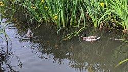 Bingham's Pond