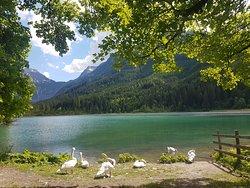 Urlaub am Bauernhof mit Familie in Österreich, Salzburg Kleinarl