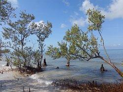 kice Island.