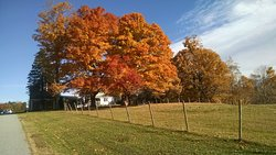 The inn's large sugar maple trees in full fall foliage as you drive up our long driveway.