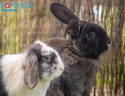 Meet some of our wonderful residents we have at the sanctuary!