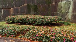 Beautifully pruned beds of colourfull Azaleas against the grey stone walls