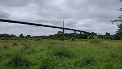 Erskine Bridge from the Saltings