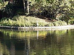 riflessi e trasparenze nel laghetto del Parco del Villone Puccini con un airone sull'isoletta