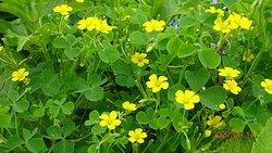 紫陽花の傍に可憐な花