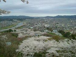 Bird's eye view of Sakura in Shiroishi.