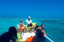 Snorkeling the Barrier Reef