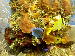 Diving & Coral formation