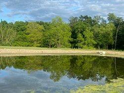 Reflection pond behind hotel