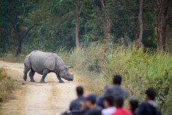 One Horned Rhino .. The gentle beast