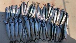 Fishing in Kotor, Montenegro (mackerel)