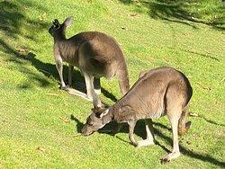 Small cats and kangaroos!