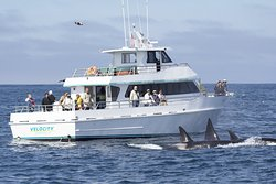 Stagnaro Sport Fishing Charters & Whale Watching Cruises