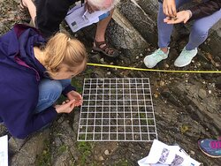 Participate in one of our surveys and find out more about local habitats.