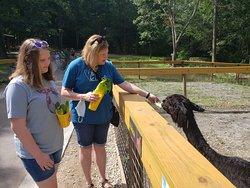Alpaca feeding at Yellow River Wildlife Sanctuary.
