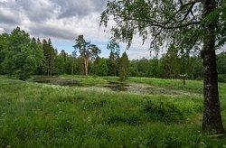 бывший парк с сохранившимся прудом