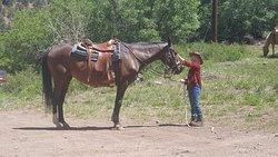 Gold Mountain Trail Rides LLC