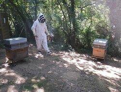 Pour tout savoir sur la ruche, la fabrication du miel. Petite dégustation à la clé.